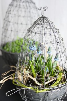 wire plant protectors