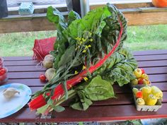 Life bouquet of beautiful greens, red swiss chard, broccoli flowers