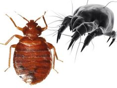 Are all dust mite covers bed bug proof too? Bed bug covers will protect against dust mites, but not all dust mite proof covers will protect against bed bugs.