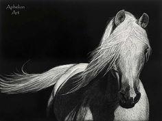 """""""Grace""""- Arabian Stallion Scratchboard by Aphelion Art, via Flickr"""