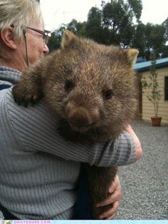 Wombat Hugs!
