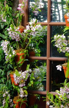 floral royal border design vector