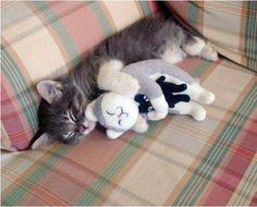kitties hugging kitties hugging kitties