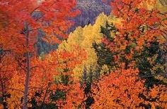 Colorado mountains in the fall!