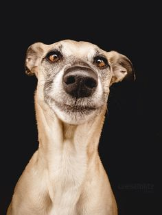 Pup face!