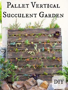 Plant your own pallet vertical succulent garden!