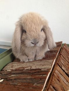 Meet Mabel the bunneh. She lives in Paris..