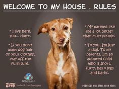 Love this! anim, dogs, hous rule, pets, dog houses, children, true, house rules, puppi