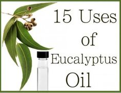 This oil is amazing, 15 Uses of Eucalyptus Oil #arborproducts #arboroil #eucalyptusoil