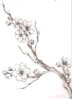 Cherry branch   tagged pencil illustration cherry branch cherry blossoms sketch ...