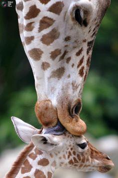 Mama kiss.