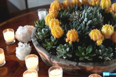 Succulent Centerpiece... love