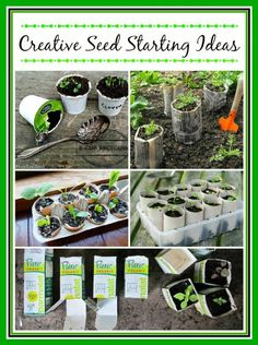 10 Unbelievably Creative Seed Starting Ideas -