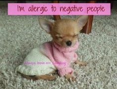 Chihuahua ~ I hate negative people!!!