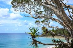 Noosa National Park, Noosa Heads, Australia - An absolutely breathtaking coastline! A great place to walk with the family!