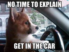 dogs, getaway car, animal humor, funni, corgi, seats, puppi, dog pictures, friend
