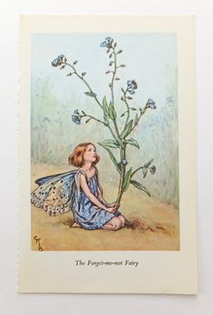 Forget Me Not Fairy Picture