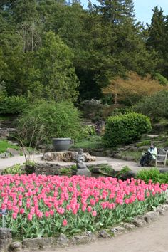 Spring is the beginning of the bloom season for the Royal Botanical Gardens, the largest botanical garden in Canada, and a National Historic Site.  Flowers in bloom include lilacs, iries, peonies, roses, tulips and so much more!