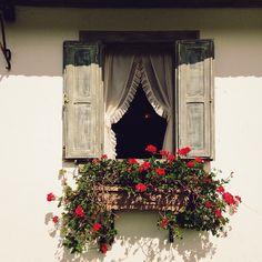 Window box, shutters, curtains. <3