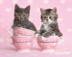 Rachael Hale's pic of the day: Granite and Jasmine, two little princesses taking their tea!