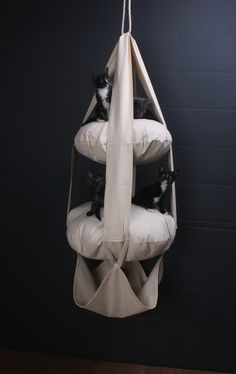 Win a Cats Trapeze Cushioned Cat Swing from Zoe Pet Supply | Catster