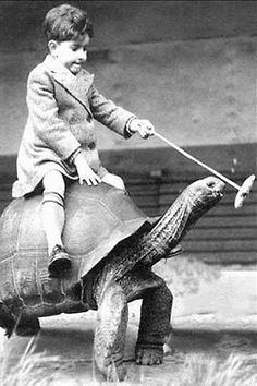 Boy Sitting on Turtle. S)