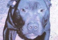 Death Row Dog Lennox Put Down After 2-Year Legal Battle