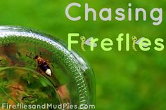 Chasing Fireflies from Fireflies and Mud Pies