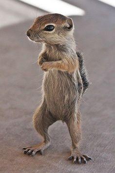 Any Nuts!!