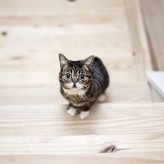 This is BUB: she is the most determined and remarkable living thing I know. Click this to watch her climb up a 15 step staircase for proof.O...
