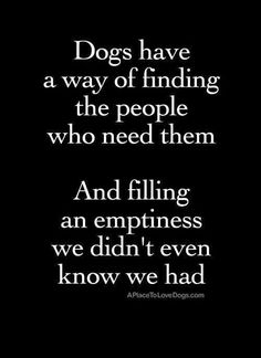 Dogs have a way of finding people
