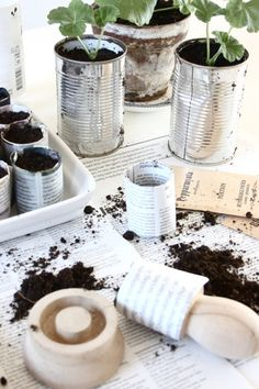 tubes made from newspaper to separate little plants - easy and cheap - great idea!