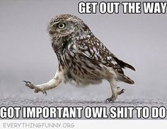 funny caption get out of my way i important owl shit to do