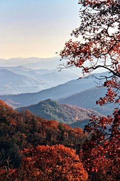 Fall colors in the Great Smoky Mountains NP, North Carolina.