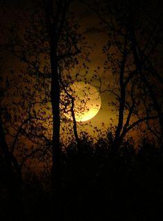 #moon #full_moon #tree