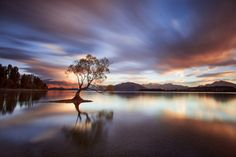One Calm Tree. by Rob Dickinson on 500px