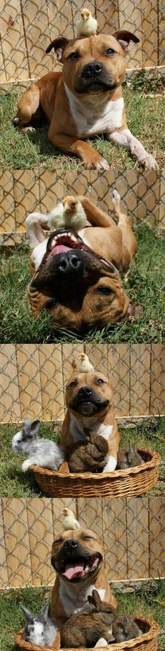 omg most adorable dog ever