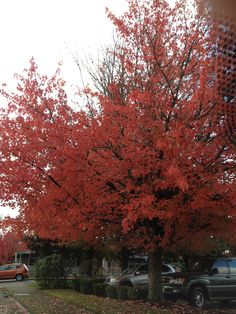 Love the trees in the fall