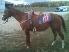 Youth Barrel Horses For Sale (Borden, IN)