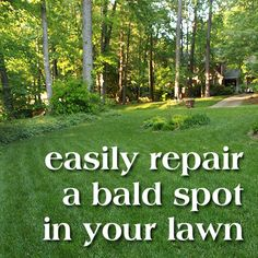 How to patch your lawn's bald spots by Pretty Handy Girl