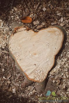 we are so grateful for the heart.  as a noun, as a verb, formally, and informally it supports life. today, we are especially thankful for all the volunteers from 9/11.    we came across this heart on a stroll through the woods.  we were sad to see the  tree was no longer standing, but the stump made us smile when we realized it left its heart to rest forever. #freshphotographyforhappycouples, #ameliaanddan, http://ameliaanddan.com