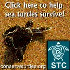 "Sea Turtles need our help! Go to this ""http://www.conserveturtles.org""><img src=""http://www.conserveturtles.org/"