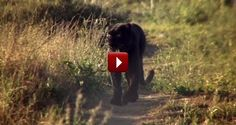 The Soul Touching Story Of An Angry Panther Who Talked To A Human