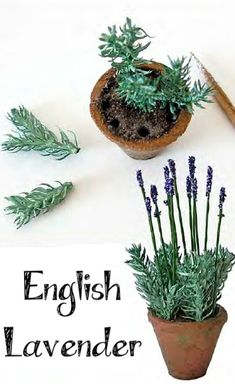 how to: English lavender by Marianne Cook (AIM #43, page 22)