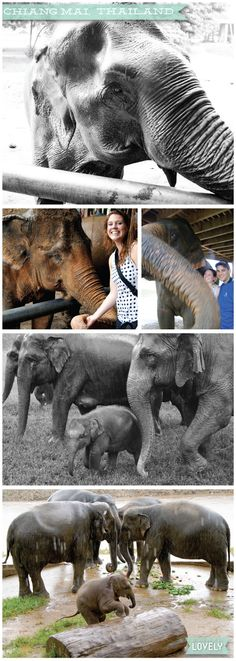 Asia travel, chiang mai thailand, elephant encounter, elephant nature reserve, Wouldn't it be Lovely