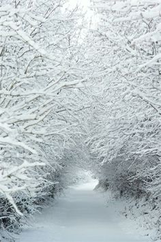 A Beautiful Snowy Road with Trees [5 Pictures]