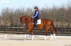 7 Under-Saddle Problems and How to Fix Them by Holly Caccamise   Horse Channel    Use a little dressage know-how to improve the fast horse, the slow horse, the stiff horse, and others.