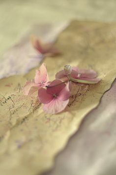 pastels, pink flowers, soft pink, pastel pink, old letters