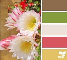 design seeds: color blooms by kaitlin