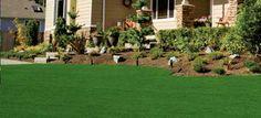 plant, green lawn, backyard